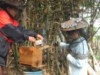 Apiculture raisonnée au Laos